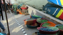 1 plase pescuit