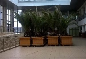 palmieri-la-gara-constanta-3