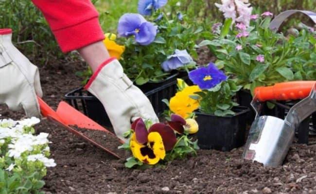 plantare-flori
