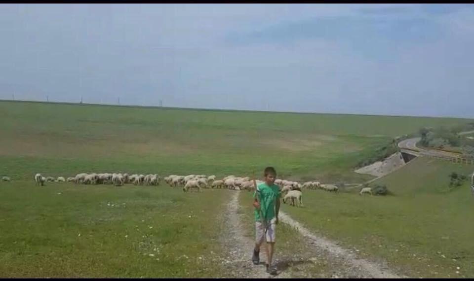 copil cu oile