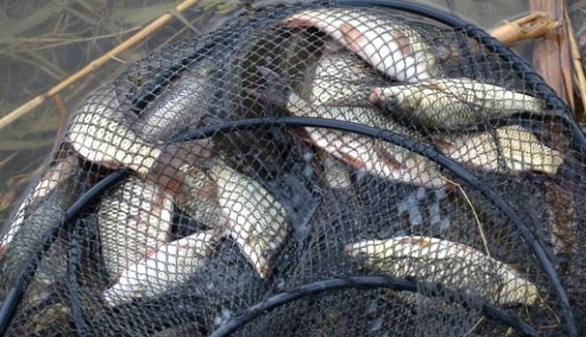 pescuit ilegal de peste