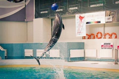 delfinariu poza draguta