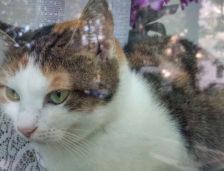 RAEDPP Constanța reacționează în cazul pisicii Suzy