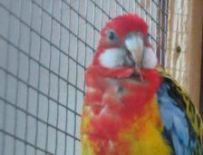 Secția Microrezervație și păsări exotice angajează