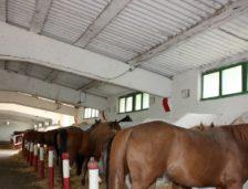 Încă nu au început reparațiie la herghelia Mangalia! Nici caii nu pot fi scoși la antrenamente