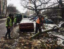 (GALERIE FOTO) Bilanțul furtunii din municipiul Constanța: zeci de copaci căzuți, mașini avariate și panouri publicitare distruse