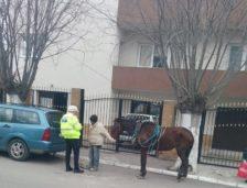 Scandal cu zeci de oameni în Constanţa! Un bărbat care conducea o căruţă a fost amendat şi încătuşat