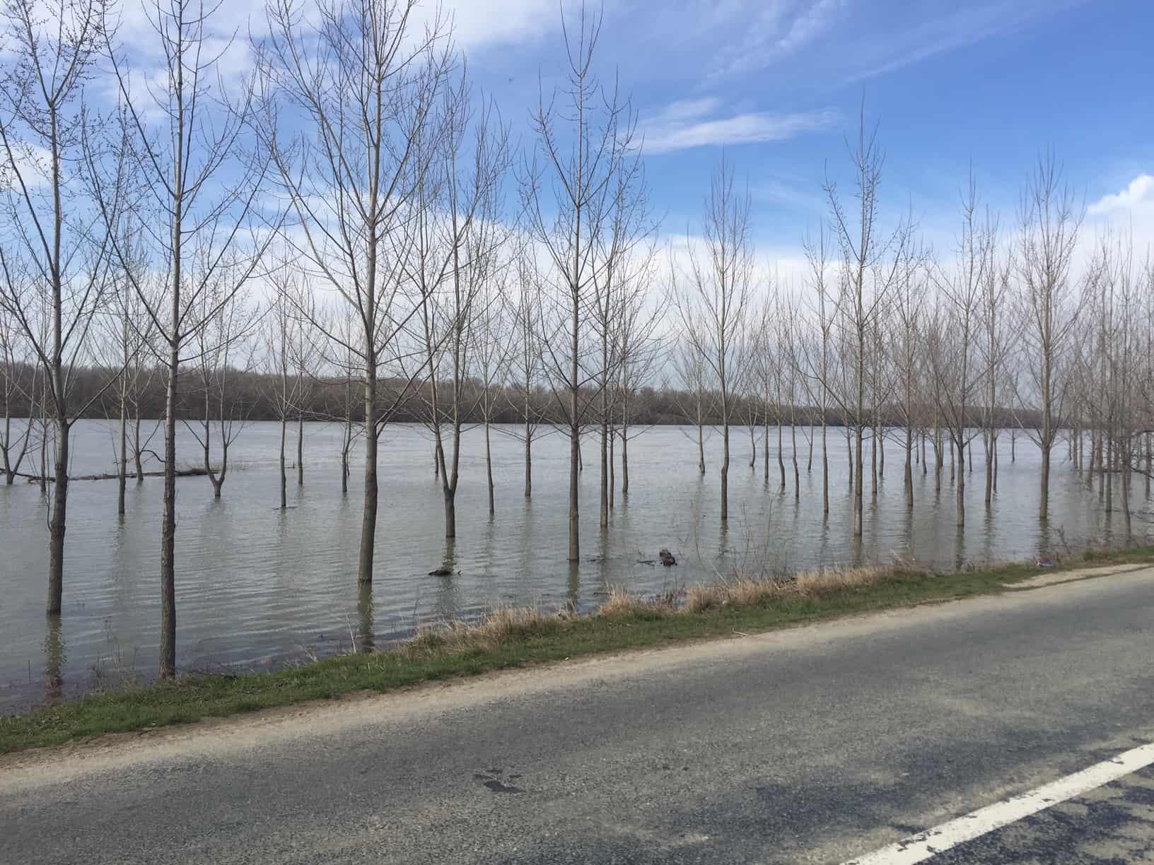 inundatii dunare rasova_5578