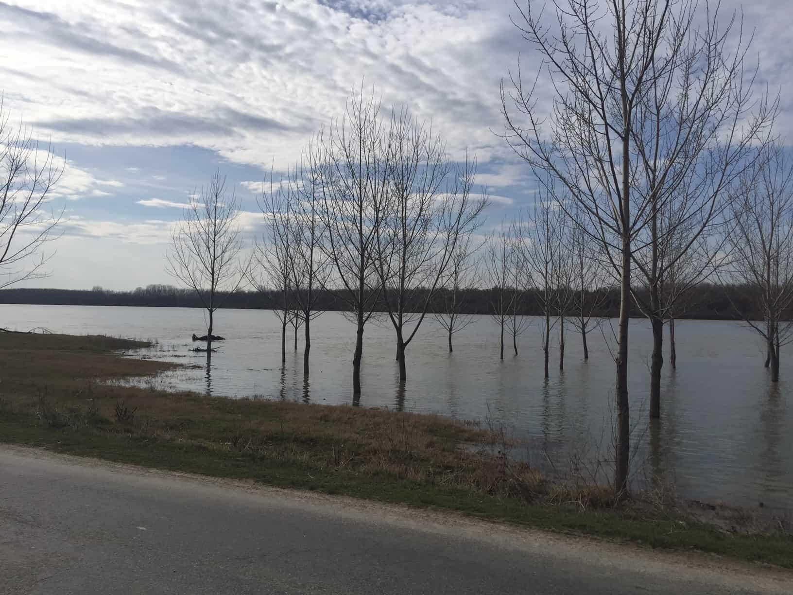 inundatii dunare rasova_5579