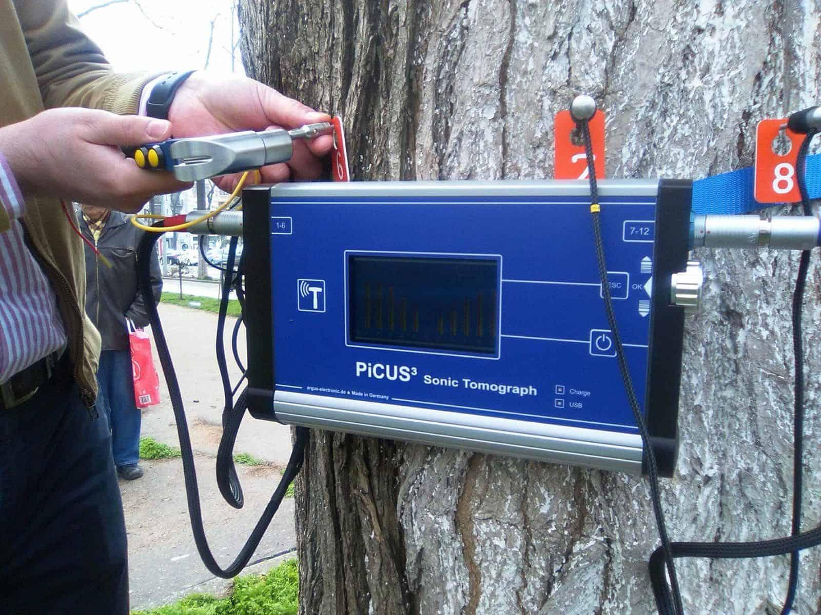 tomograf pentru copaci2