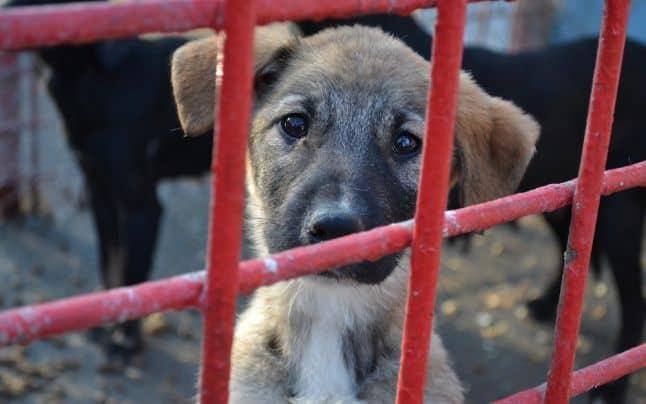 animale abandonate – serviciu public constanta