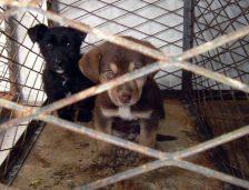 Inspectorii DSV Constanța, control la un adăpost de câini! Vezi ce alte acțiuni au avut