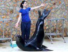 Iată care sunt tarifele pentru reprezentațiile leilor de mare de la Delfinariu