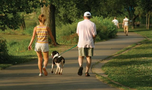 plimbare caine parc