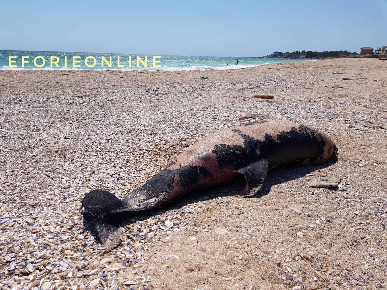 delfin esuat Eforie