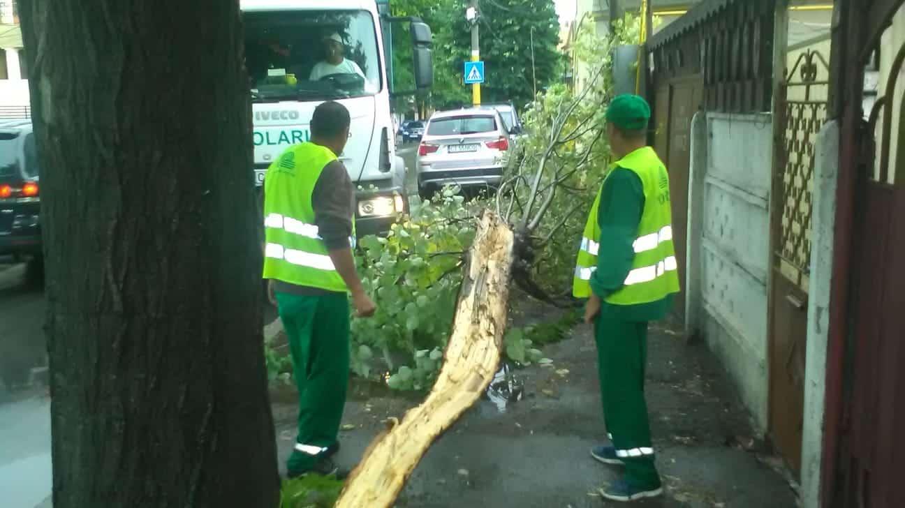 angajatii polartis copaci cazuti
