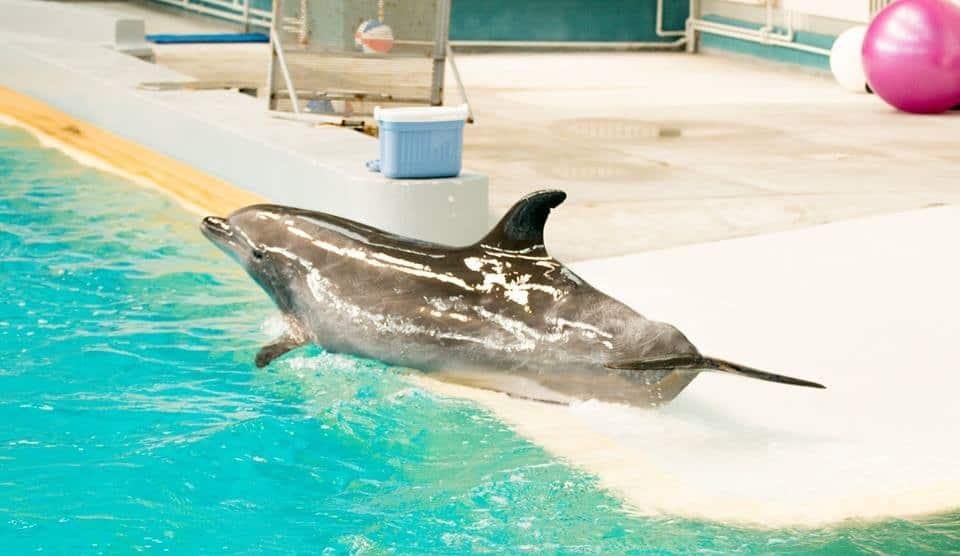delfinariu azi