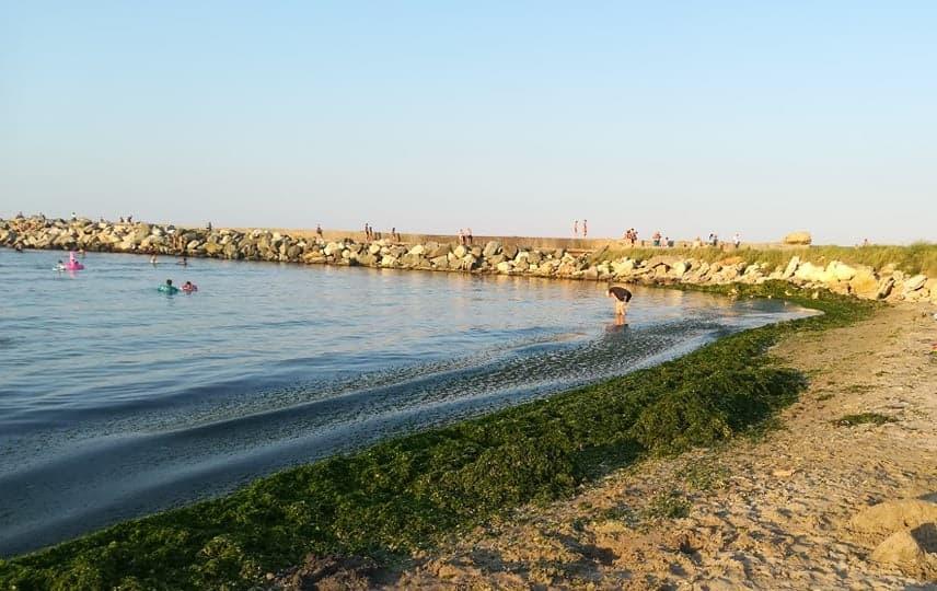 alge in sudul litoralului