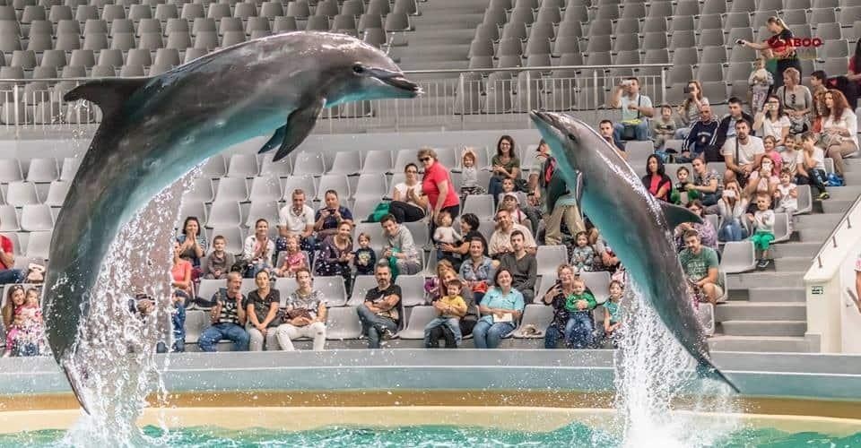 delfinariu frumos