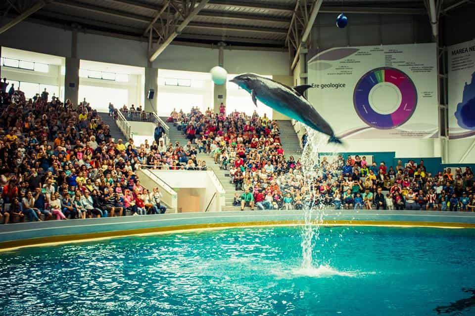 delfini se joaca