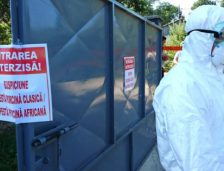 Județul Constanța. Începe uciderea porcilor din satul Băltăgești