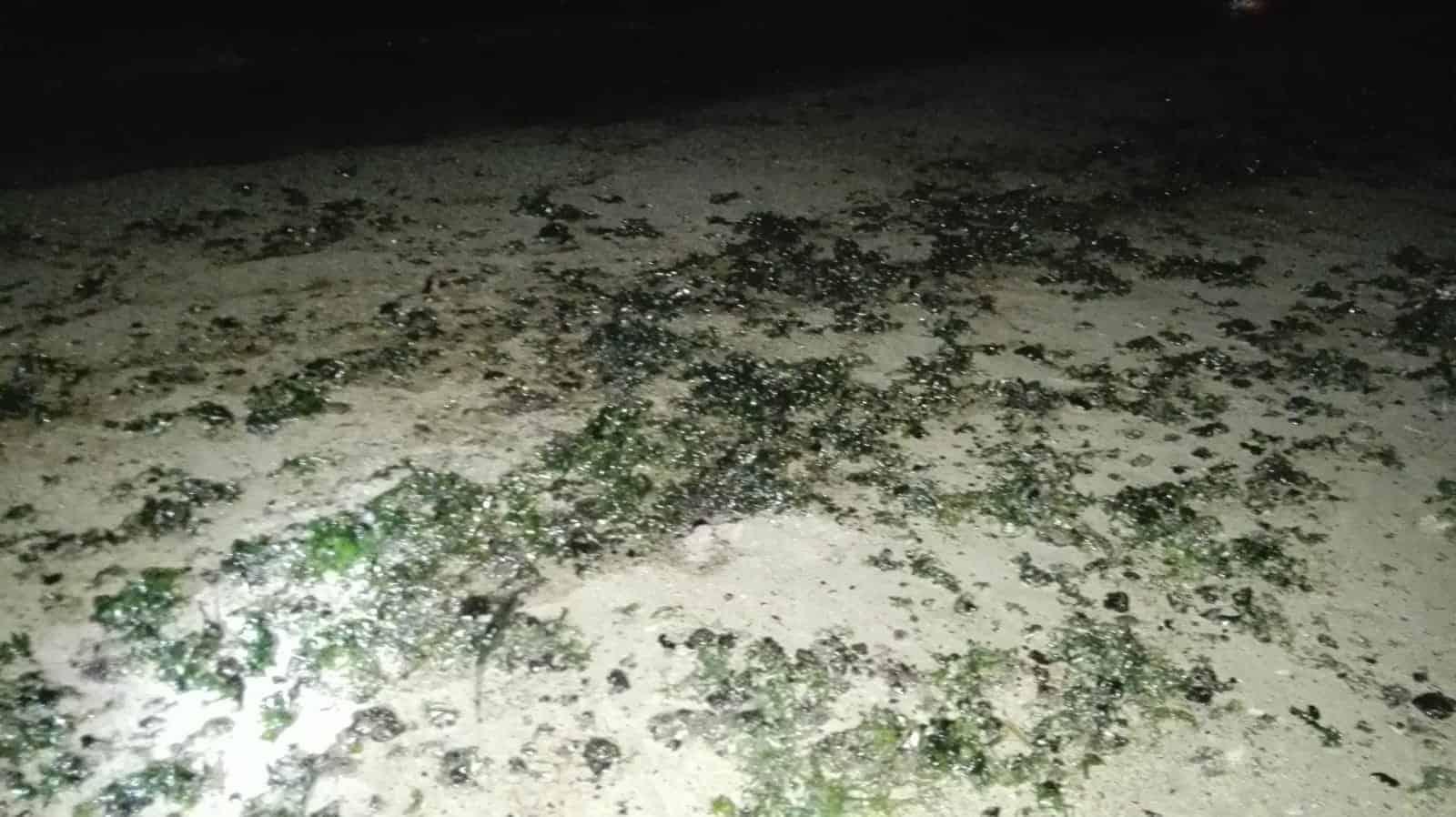 poluare plaja mangalia2