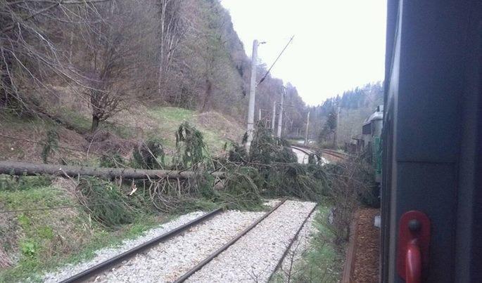 copac cazut tren intarziat