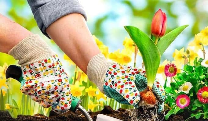 planteaza flori